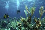 Khảo sát dưới nước: vùng Caribbean là một thiên đường đang bị đe dọa