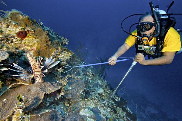 Nhà hoạt động môi trường Peter Douglas săn cá sư tử và loài này đã di cư đến Bahamas và phá hủy hệ sinh thái.