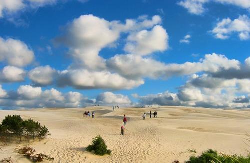 Đụn cát di động Råbjerg Mile, sa mạc tí hon của Đan Mạch. Ảnh: Flickr.