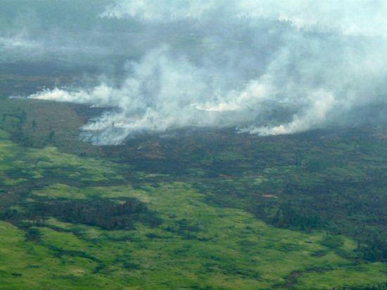Rừng đang bị phá hủy trên đảo Borneo