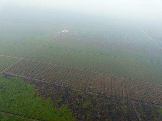 Đồn điền trồng cọ dầu, khói do đốt rừng ở Palangkaraya trên đảo Borneo