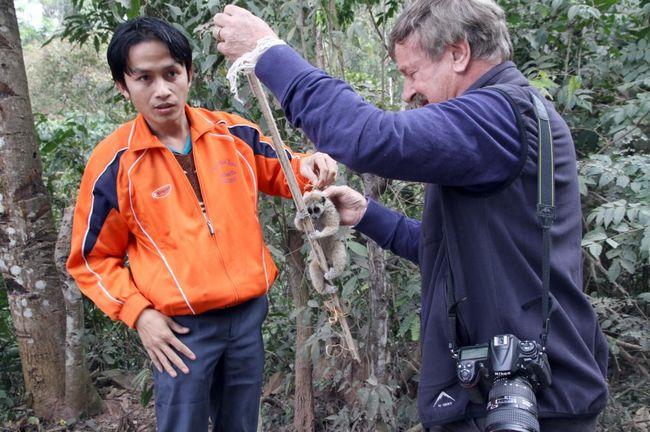 Nhà bảo tồn loài vật thả một con cu li chậm về rừng.