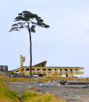 Khách sạn dành cho thanh thiều niên đã đổ nát và cây thông duy nhất còn sống sót của khoảng 70.000 cây thông tại Takata-Matsubara, Rikuzentakata. Hình: Wikipedia