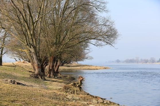 Sông Oder
