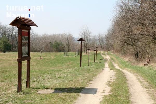 Tại nơi đây, gần biên giới Áo-Hung, nhiều gia đình Đông Đức đã chạy sang được lãnh thổ Áo vào ngày 19 tháng Tám 1989