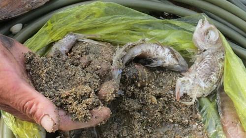 Hiện vật đầu tiên mà anh Thùy mang lên từ đáy biển, bao gồm xác cá, xác ngao và một ít bùn đất