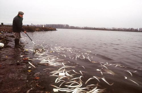 Cá chết trên sông Rhein nhuộm màu đỏ