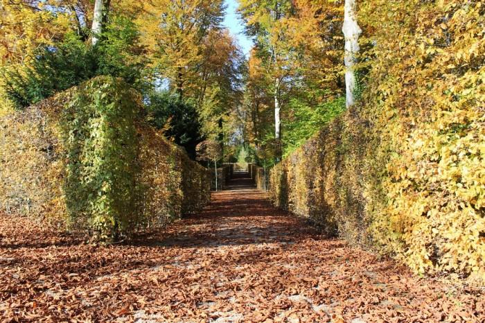 Vườn hoa Lâu đài Schwetzingen