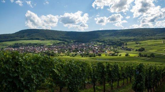 Đường Rượu Vang vùng Alsace